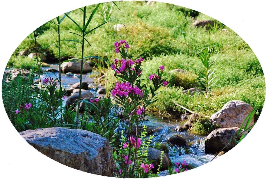 Test - Wilder Oleander am Bachlauf